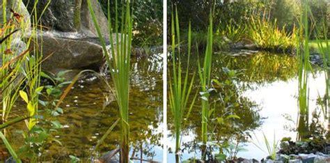 japanische gärten bildergalerie biotop gartengestaltung korneuburg mistelbach wien