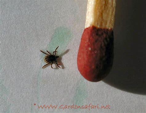 kleine rode spinnetjes in huis de tuinsafari spinnen mijten in en rond het huis