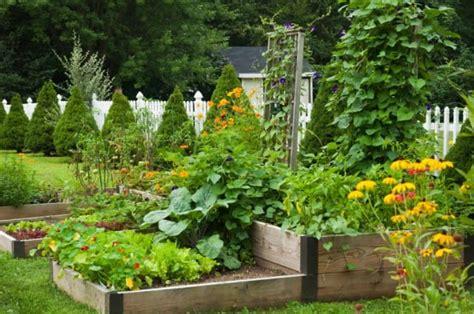 orto e giardino orto autunno cosa piantare non sprecare