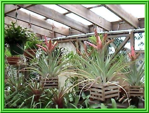 Topi Floral tillandsia fasciculata tropiflora 45 00
