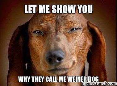 Weiner Dog Meme - pitbull weiner dog meme