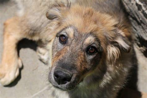 imagenes de animales maltratados seis se 241 ales de maltrato en perros y c 243 mo ayudarles