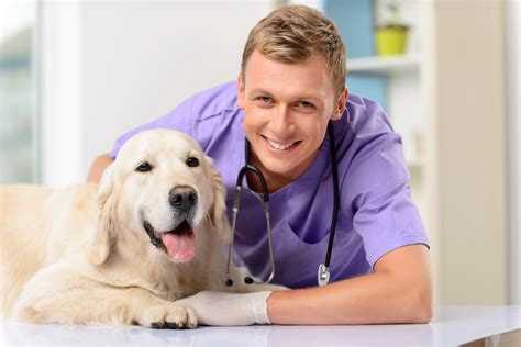 puppy s vet visit what to expect during a puppy s vet visit