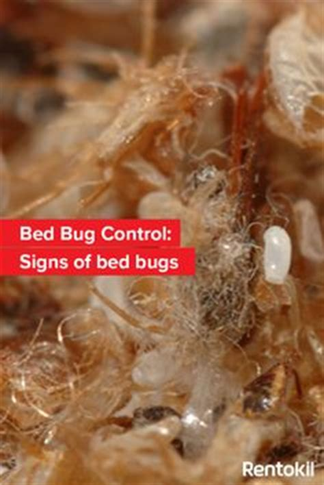 signs of bed bugs thinking of going on holiday soon here s how to check