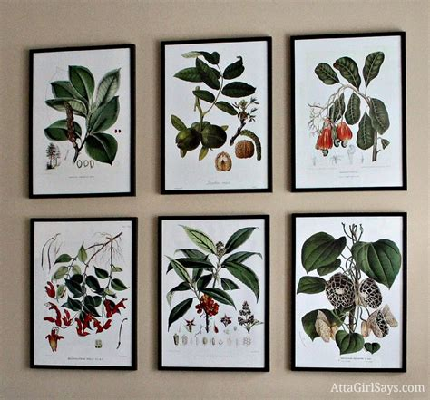 how to frame a print where to find inexpensive antique botanical prints