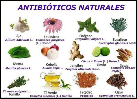 remedios naturales para enfermedades inediacom antibi 243 ticos naturales mejora tu inmunidad natural con