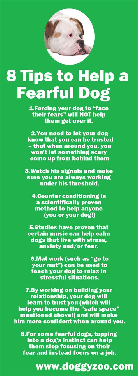 8 tips to help a fearful doggyzoo comdoggyzoo