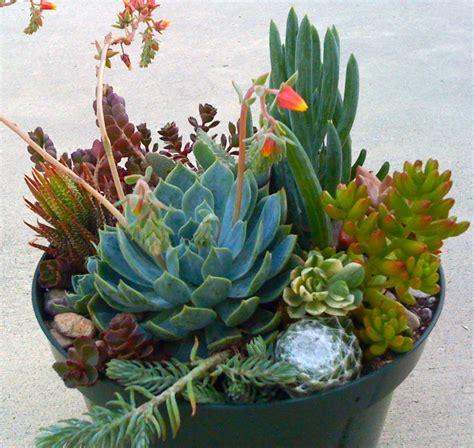 Succulent Plants Terrarium Succulent Centerpieces Dish Succulent Plant Centerpiece