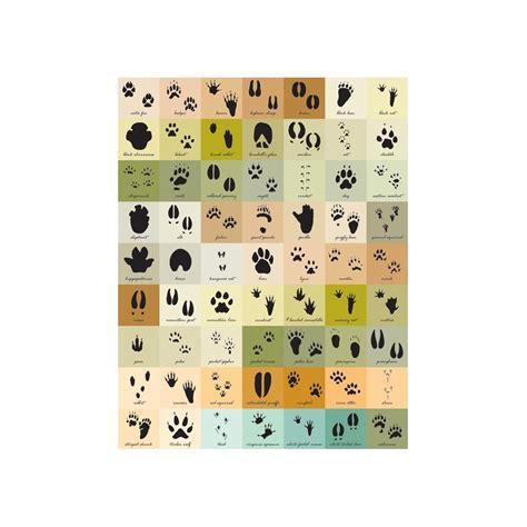 printable animal track guide animal tracks identification chart www imgkid com the