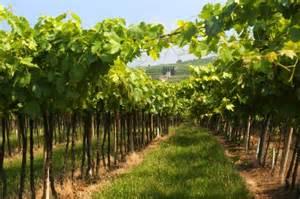 Wineries Near Veneto Contributi Per L Ammodernamento Delle Aziende