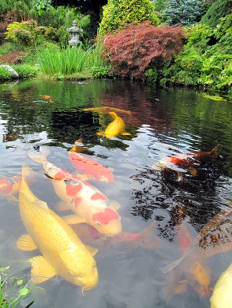 Koi Garden by Triyae Backyard Koi Ponds And Gardens Various