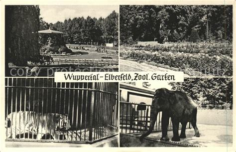 Deutsche Post Zoologischer Garten Berlin öffnungszeiten by Hf23211 Elefant Tiger Zoologischer Garten Wuppertal