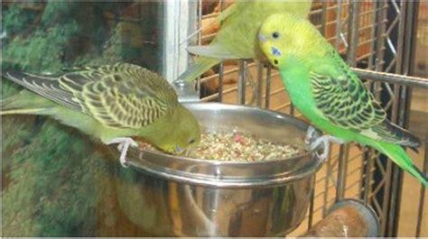 Tempat Makanan Burung Parkit alat pemisah biji ala om kicau untuk efisiensi pakan