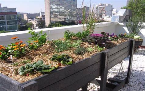 imagenes de jardines urbanos atrevete y despierta cuidar un huerto urbano en 12 consejos