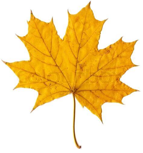 Autumn Leaf autumn leaf drawings www pixshark images galleries