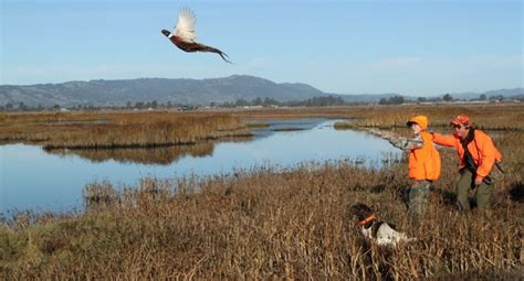 how to a to bird hunt 5 things to get you excited for upland bird