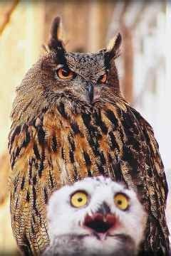 funny owl images funny animal