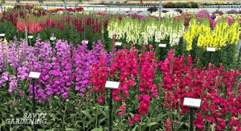 Cut Flower Garden List Growing Cut Flowers