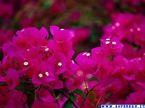 ci fiori wallpaper fiori 58 wallpaper in alta definizione hd