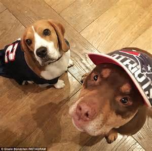tom brady yorkie gisele bundchen and tom brady adopt rescue named fluffy and say the pup is