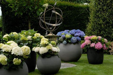 piante da ombra per giardino piante da ombra guida completa per un giardino fiorito
