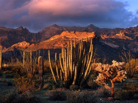 Iphone 55sse66s66s 77 3d Cactus desert cactus wallpaper 1600x1200 wallpoper 340277