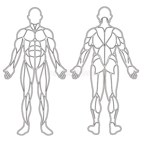 human vector tutorial human body muscles silhouette stock vector illustration