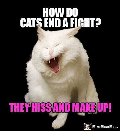 laughing cat meme laughing cat meme how do cats end a fight they hiss and