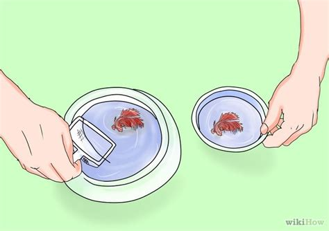 how to clean a betta fish bowl with pictures wikihow