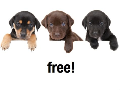 puppy for free free puppies davidebowman