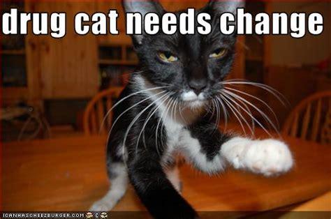 drug cat  change cheezburger funny memes funny