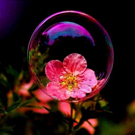 imagenes extraordinarias de flores im 193 genes de flores rosas margaritas cl 225 veles y m 225 s
