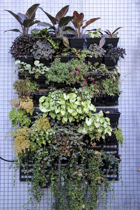 how to create vertical gardens cheap sheds