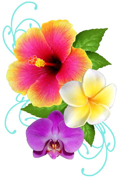 image gallery hibiscus plumeria