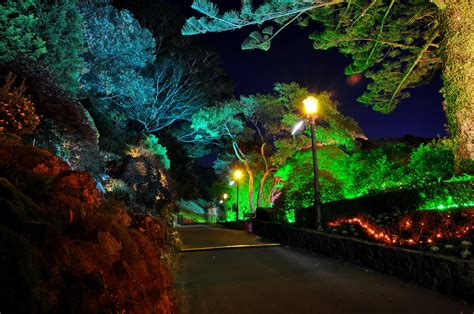 Colored Landscape Lights Gardens Roads New Zealand Wellington Botanical Lights Nature Garden Wallpaper