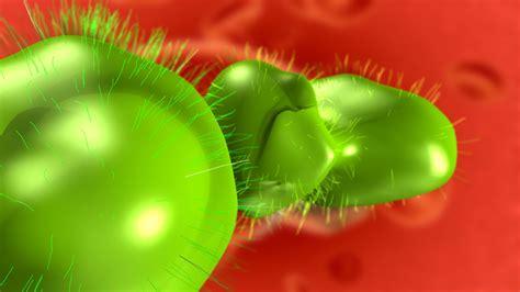 google wallpaper virus background virus wallpaper 37674