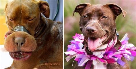 ones dogs caitlyn the found with muzzle taped one year later