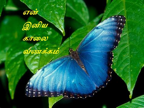 whatsapp wallpaper tamil lovable images tamil good morning mobile background