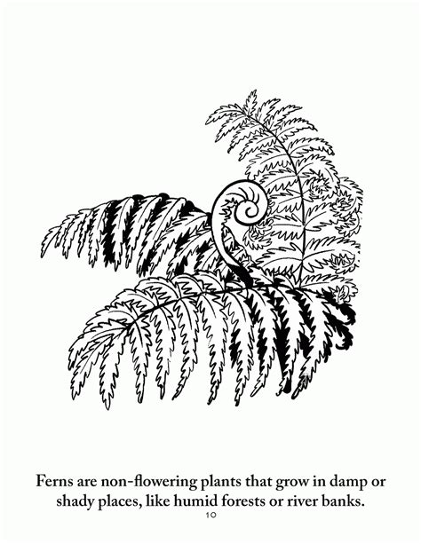 botany coloring pages coloring home