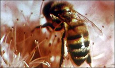 ludolph hauser news health bee sting test could save lives