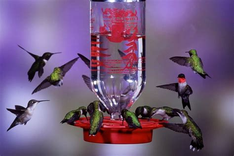 best 1 32oz hummingbird feeder new free shipping ebay