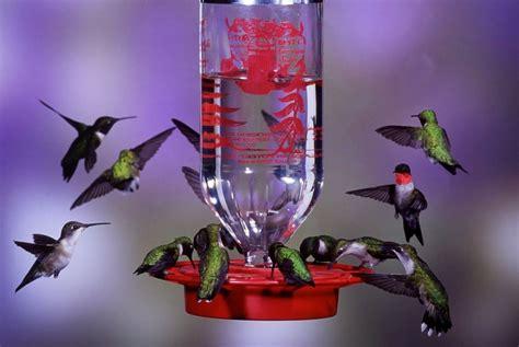 Best One Hummingbird Feeder best 1 32oz hummingbird feeder new free shipping ebay