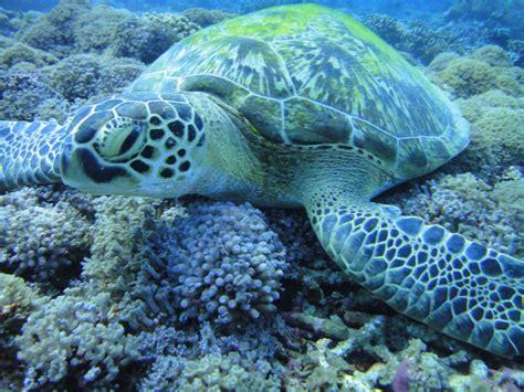 dive lombok scuba diving lombok indonesia nos vamos a las islas