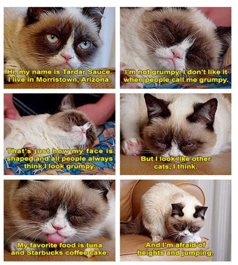 Tardar Sauce Meme - tarder sauce grumpy cat grumpy cat know your meme