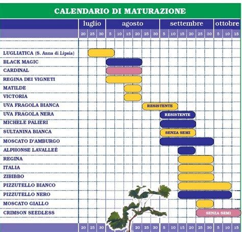 calendario da tavola calendario maturazione uva da tavola tradizionale e
