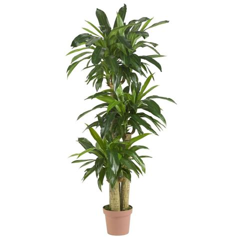 indoor plants low light 17 best ideas about indoor plants low light on pinterest