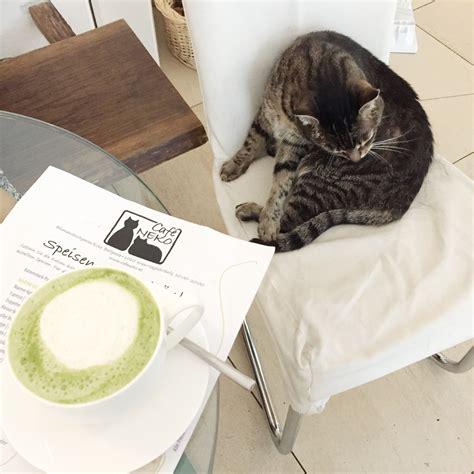 kuchen radio radio loungefmkatzen kaffee und kuchen radio loungefm