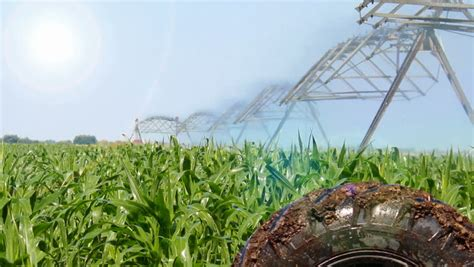 irrigated corn irrigating of corn an irrigation sprinkler watering a