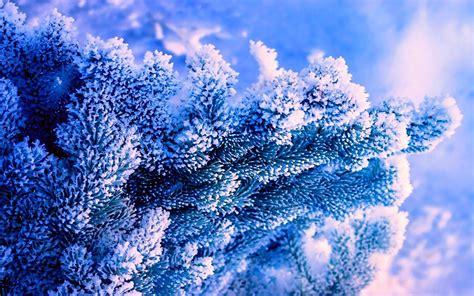 Mainan Salju Frozen Gel Magic Snow winter natur baum blauem hintergrund fichte schnee
