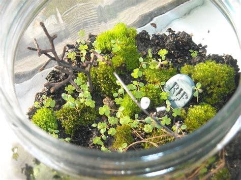 moss terrarium     terrarium gardening